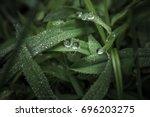 drops dew morning water grass... | Shutterstock . vector #696203275