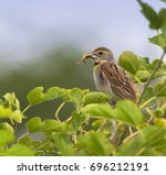 the dickcissel with small... | Shutterstock . vector #696212191