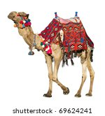 the lonely domestic camel... | Shutterstock . vector #69624241