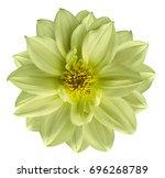 light green yellow flower on ... | Shutterstock . vector #696268789