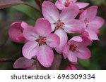 pink tree blossom | Shutterstock . vector #696309334