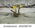 Unpretentious Flowers Foalfoot...