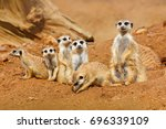 big animal family. funny image... | Shutterstock . vector #696339109