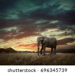 elephant with trunks and big... | Shutterstock . vector #696345739