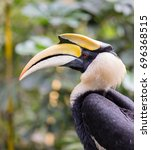 close up bird head of great...   Shutterstock . vector #696368515