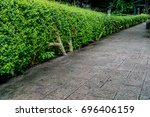 concrete pathway with green...