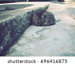 Stock photo kitten sleeping gray kitten sleep on the street at the vintage house kitten country 696416875