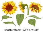 set of sunflower  yellow... | Shutterstock .eps vector #696475039