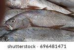 Small photo of Argyrosomus regius (also known as meagre, croaker, jewfish, shade-fish, corvina, salmon-bass or stone bass)