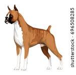 Boxer Dog  Isolated On White ...
