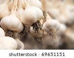 Garlic Harvest  Growing...