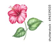 hibiscus flower isolated on a... | Shutterstock . vector #696539035