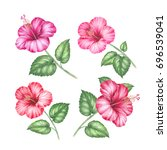 tropical collection of hibiscus ... | Shutterstock . vector #696539041