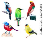 set of exotic colored birds... | Shutterstock . vector #696556489