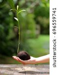 Small photo of Alstonia scholaris sprout in hands