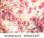 cosmos flowers in vintage style ... | Shutterstock . vector #696621247