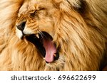Small photo of Roaring/yawing lion