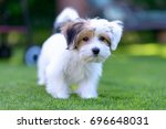 Stock photo an adorable curious puppy seems curious and inquisitive while playing on green grass in a vibrant 696648031