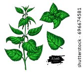 nettle vector drawing. isolated ... | Shutterstock .eps vector #696674581