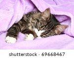 Stock photo kitten sleeps the covered soft blanket 69668467