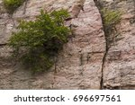tree in cliff   a tree in the... | Shutterstock . vector #696697561
