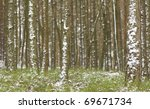 Coniferous forest winter - stock photo