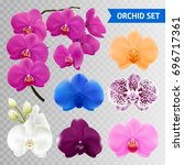 colorful orchid flowers... | Shutterstock .eps vector #696717361
