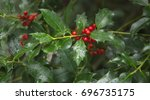 Red Berries From A Holly Tree....