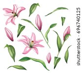 Vector Realistic Lily Flower...