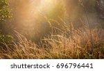 abstract autumn grass on meadow ... | Shutterstock . vector #696796441