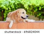 golden retriever on the floor | Shutterstock . vector #696824044