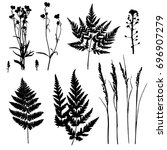 vector plant silhouettes with... | Shutterstock .eps vector #696907279