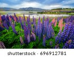 focus blended lake tekapo lupin ... | Shutterstock . vector #696912781