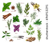 culinary herb and spice sketch... | Shutterstock .eps vector #696913291
