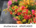 A Branch Of Red Flowers With...