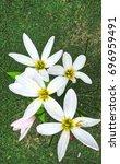 lovely white summer flowers in... | Shutterstock . vector #696959491