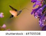 Hummingbird Hawk Moth Levitates ...