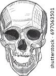 skull from front view isolated...   Shutterstock .eps vector #697063501