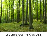 sunlight in the green forest ... | Shutterstock . vector #69707068