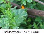 beautiful photo of flowers  | Shutterstock . vector #697119301