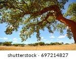Hilly Alentejo Landscape With...