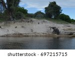 Small photo of Wild African Olive Baboon next to a river with an elephant