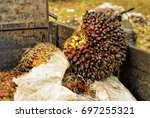 close up of fresh oil palm... | Shutterstock . vector #697255321