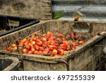 close up of fresh oil palm... | Shutterstock . vector #697255339