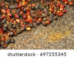 close up of fresh oil palm... | Shutterstock . vector #697255345