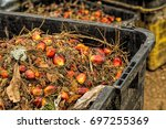 close up of fresh oil palm... | Shutterstock . vector #697255369