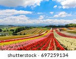 Colorful Flower Field In Sunny...
