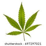 big fresh organic cannabis leaf ... | Shutterstock . vector #697297021