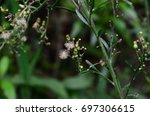 flora of the iguaque fauna and... | Shutterstock . vector #697306615