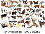 collection of different birds ... | Shutterstock . vector #697330369